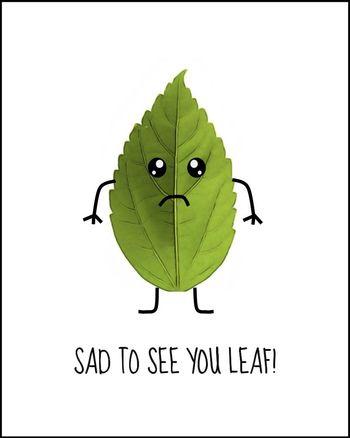 Use Sad to see you leaf